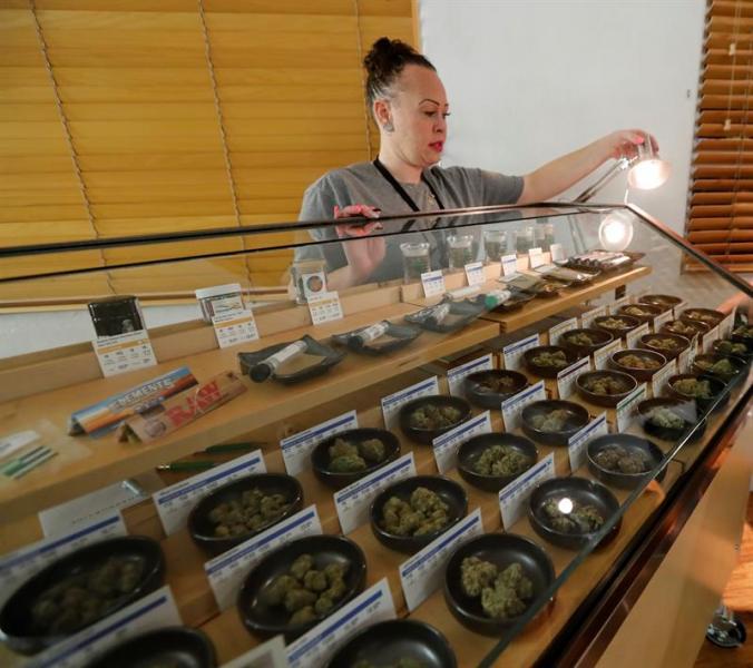 mendocino cannabis dispensary